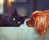 Los datos del sector de las mascotas en Europa apuntan a la estabilidad