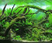 La revelación artística del paisajismo acuático