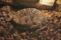 problemas de conducta en reptiles