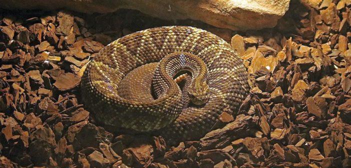 10 consejos para evitar problemas de conducta en reptiles