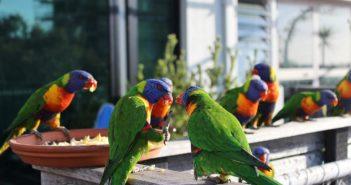 ¿Cómo influye la alimentación en la salud de las aves?