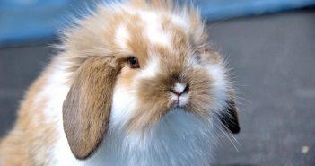 Por qué es necesaria la peluquería para conejos y hurones