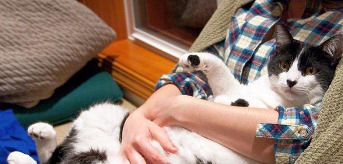 ¿Cuál es el perfil del propietario de un gato?