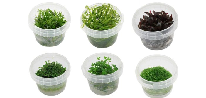 Plantas in vitroy en maceta:mantenimiento en comercios