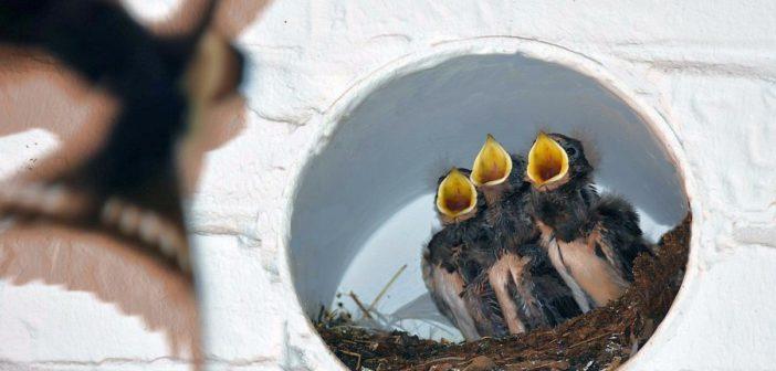 Alimentación para aves omnívoras y faunívoras