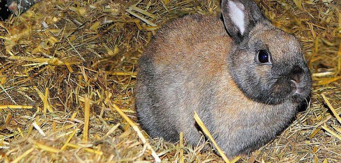 Lo que tú y tus clientes debéis saber de lechos para conejos