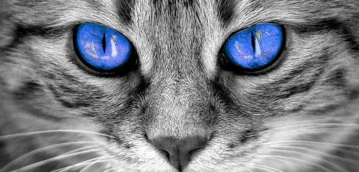 Los cinco sentidos del gato