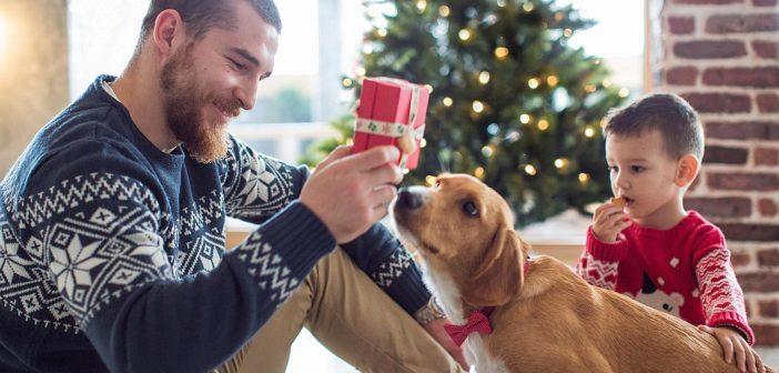 Cuando las mascotas llegan a casa por Navidad