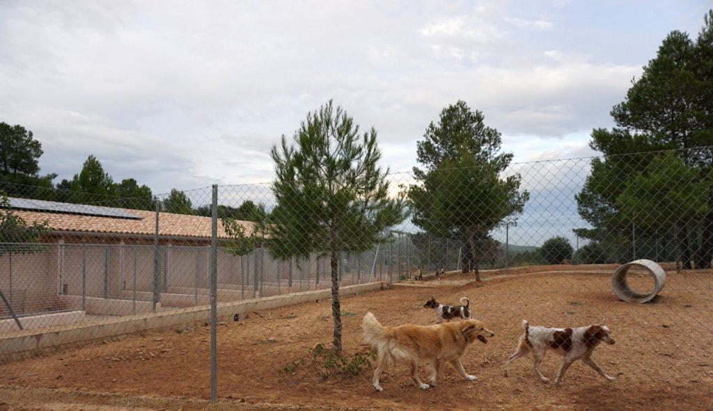 Parque de recreo donde los perros se socializan con sus congéneres.