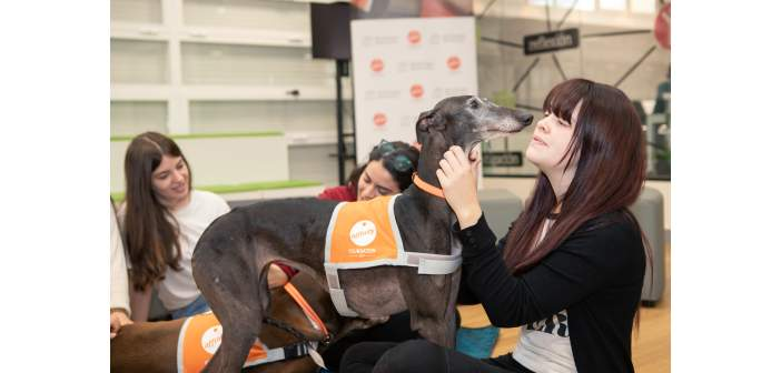 Combatir el estrés académico y la ansiedad con perros