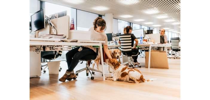 Los perros ayudan a reducir el estrés en el trabajo