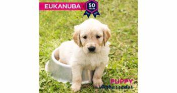 Eukanuba España busca su Eukanuba Puppy Ambassador