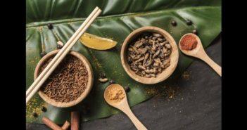 Proteína de insectos en alimentos para mascotas