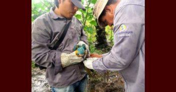 Loro Parque Fundación, 25 años de compromiso con la naturaleza
