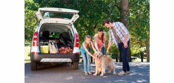 10 consejos para viajar seguro con una mascota