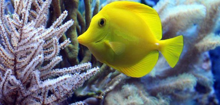 Características del acuario marino
