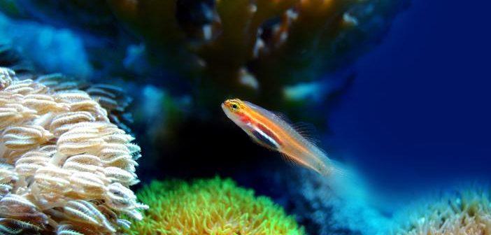 Equipamiento necesario para el acuario marino