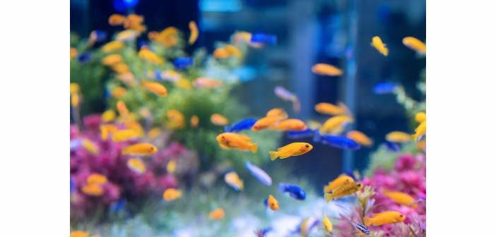 """""""Smart Aquarium"""""""