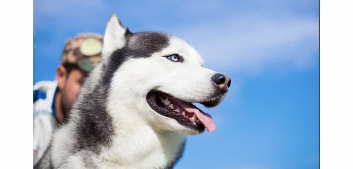 Recomendaciones nutricionales para perros muy activos