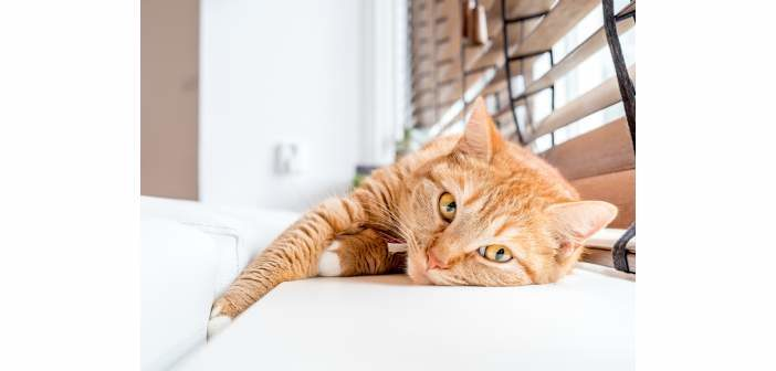 Se recomienda controlar las salidas de los gatos