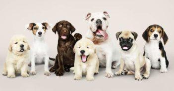 El comercio de cachorros se dispara en Reino Unido