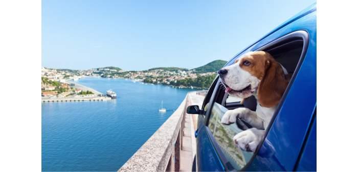 Guía para viajar con mascota