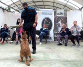Perros policía regresan a las aulas para mejorar la estimulación sensorial y motriz