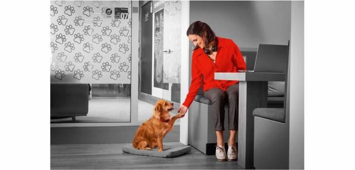 5 razones para llevar al perro al trabajo