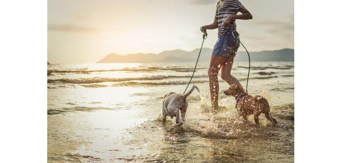7 consejos para un día de playa con el perro