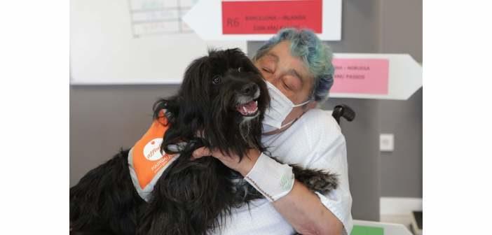 Programa de terapias con perros para fomentar la autonomía de pacientes frágiles