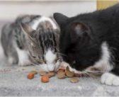 Efectos de la dieta felina en el envejecimiento y el placer de comer